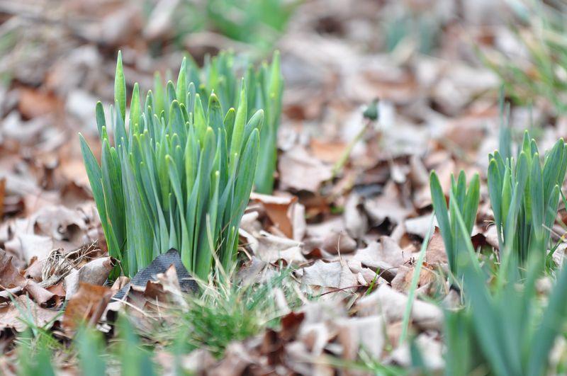 2012 march 2 Garden 3-2-2012 2-05-01 PM