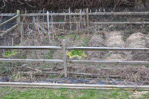 2012 march 2 Garden 3-2-2012 2-55-04 PM