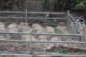 2012 march 2 Garden 3-2-2012 2-55-09 PM