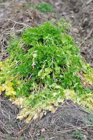 2012 march 2 Garden 3-2-2012 2-00-30 PM