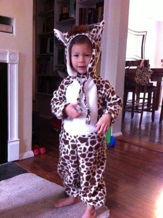 Tess giraffe